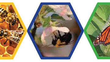 Pollinator three